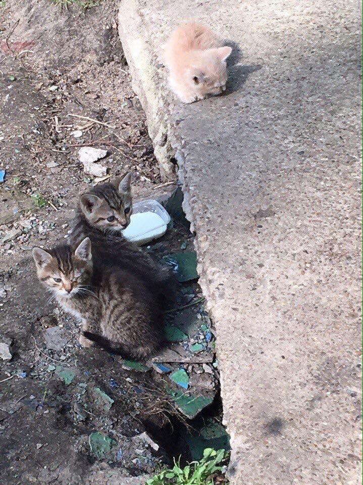 Очень нужна передержка или дом для милейших котят. Люберцы!