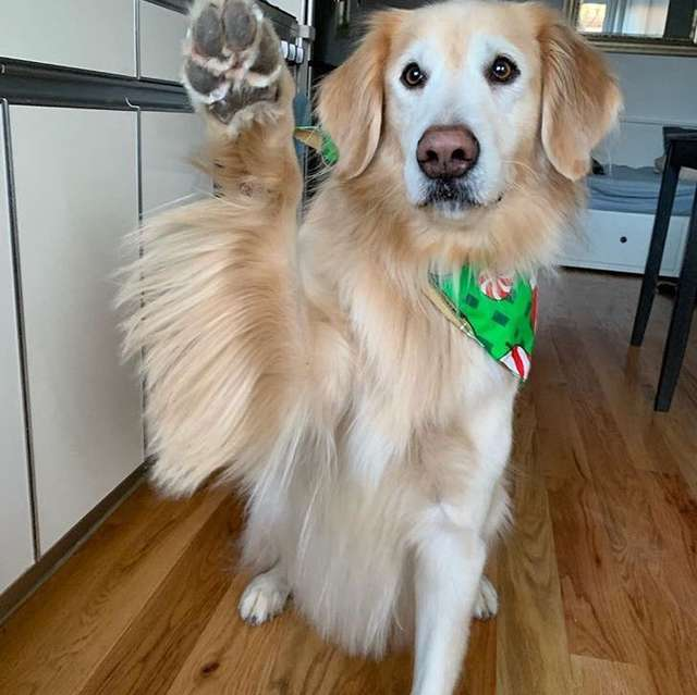 Псу стало страшно, когда на улице взорвался фейерверк. К счастью, маленькая девочка знала, как ему помочь