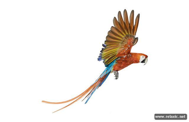 Птицы Эндрю Цукермана