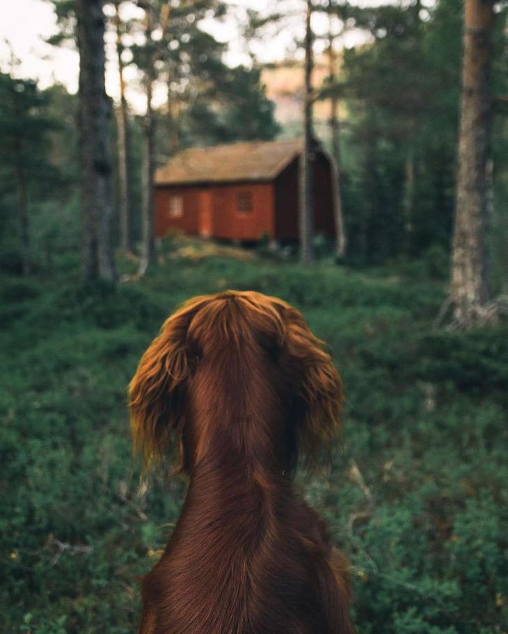 Собака путешествует по Норвегии