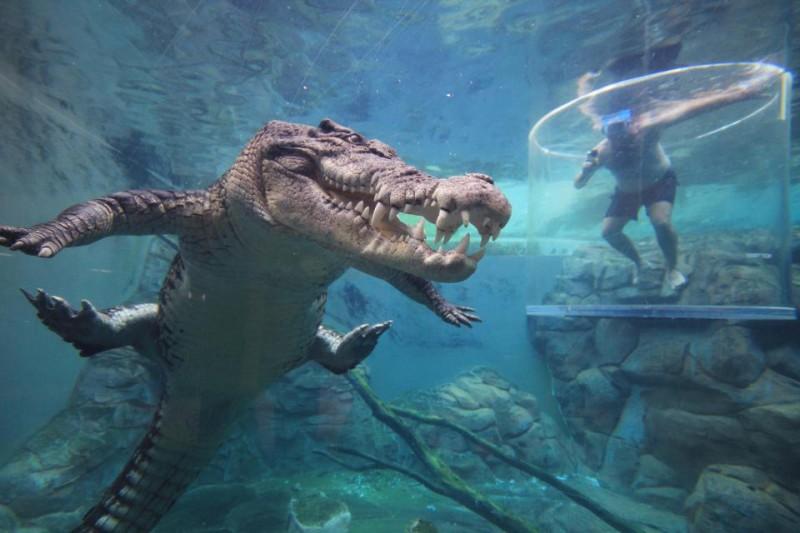 Он вам не Гена: аттракцион с погружением туристов к пятиметровому крокодилу