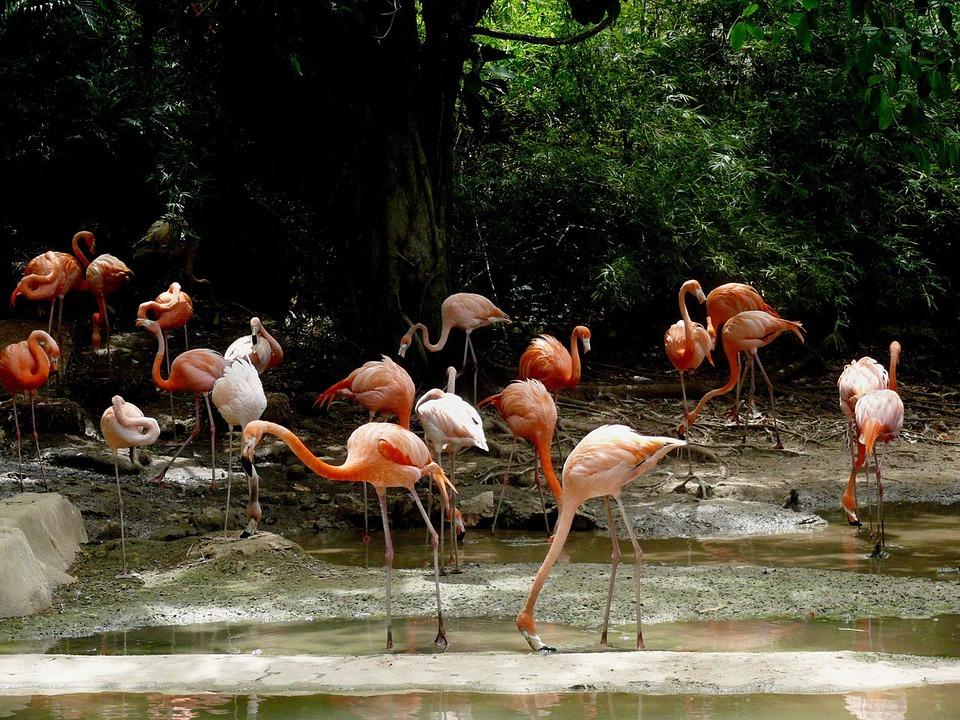 Доминикана: страна созерцателей