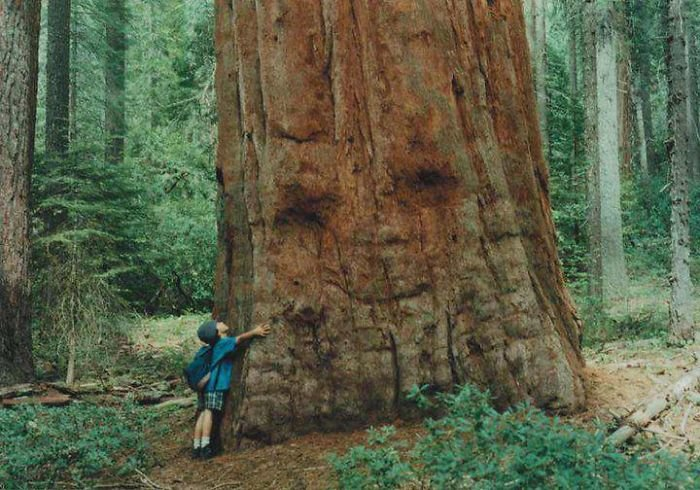 12. Обнимемся дерево, деревья, обман зрения, парейдолия, похоже да не то же, похоже на, похоже на лицо