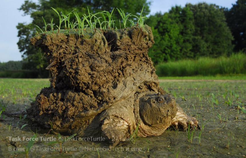 Все-таки, земля держится на черепахах: необычное фото пресмыкающегося с пластом земли