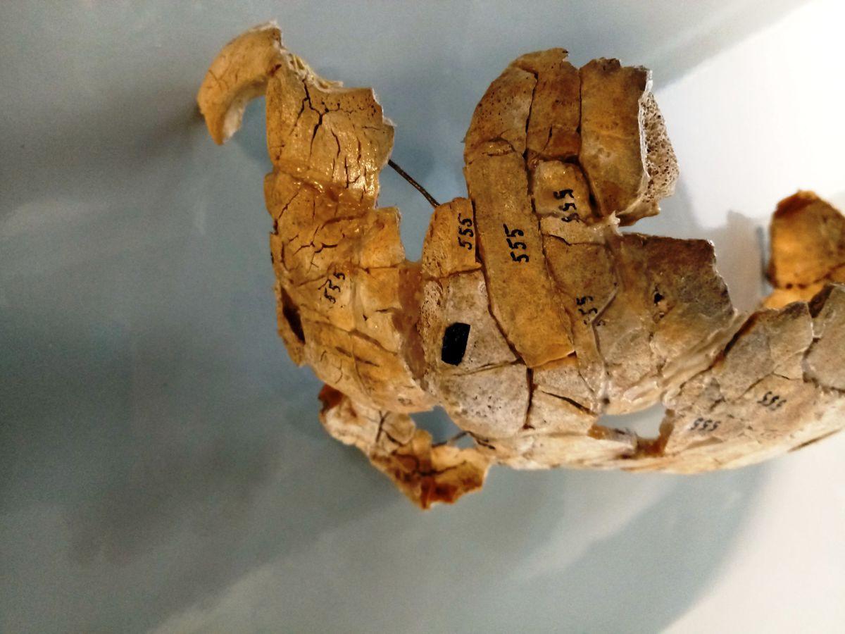 Раскрыто убийство, совершенное 8 тысяч лет назад