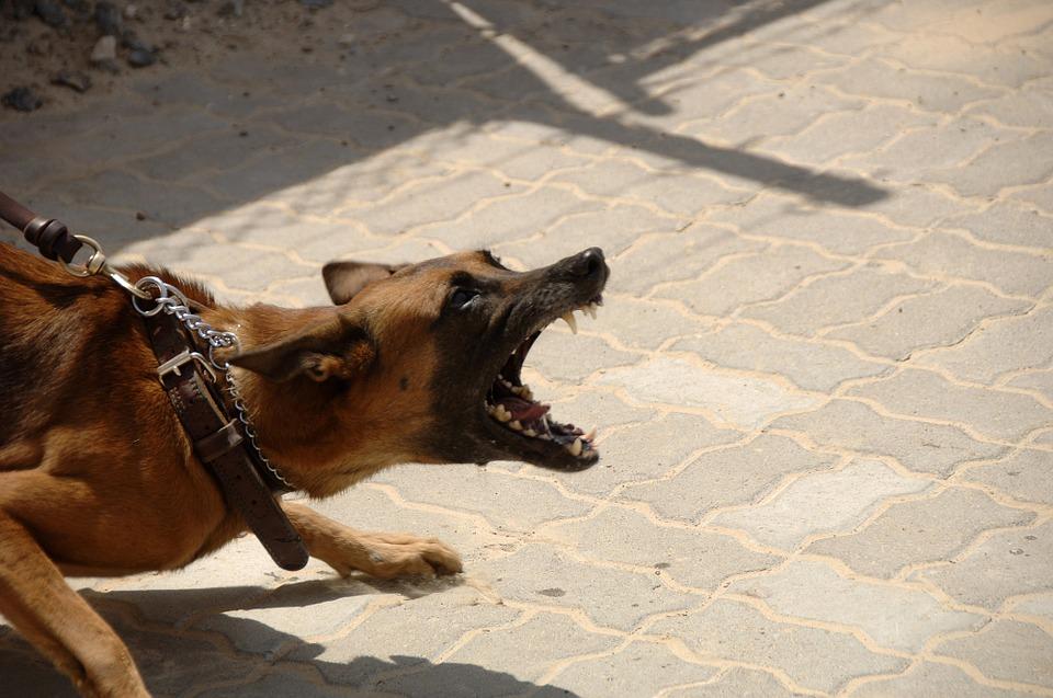 Каким образом собаки распознают «плохих» людей