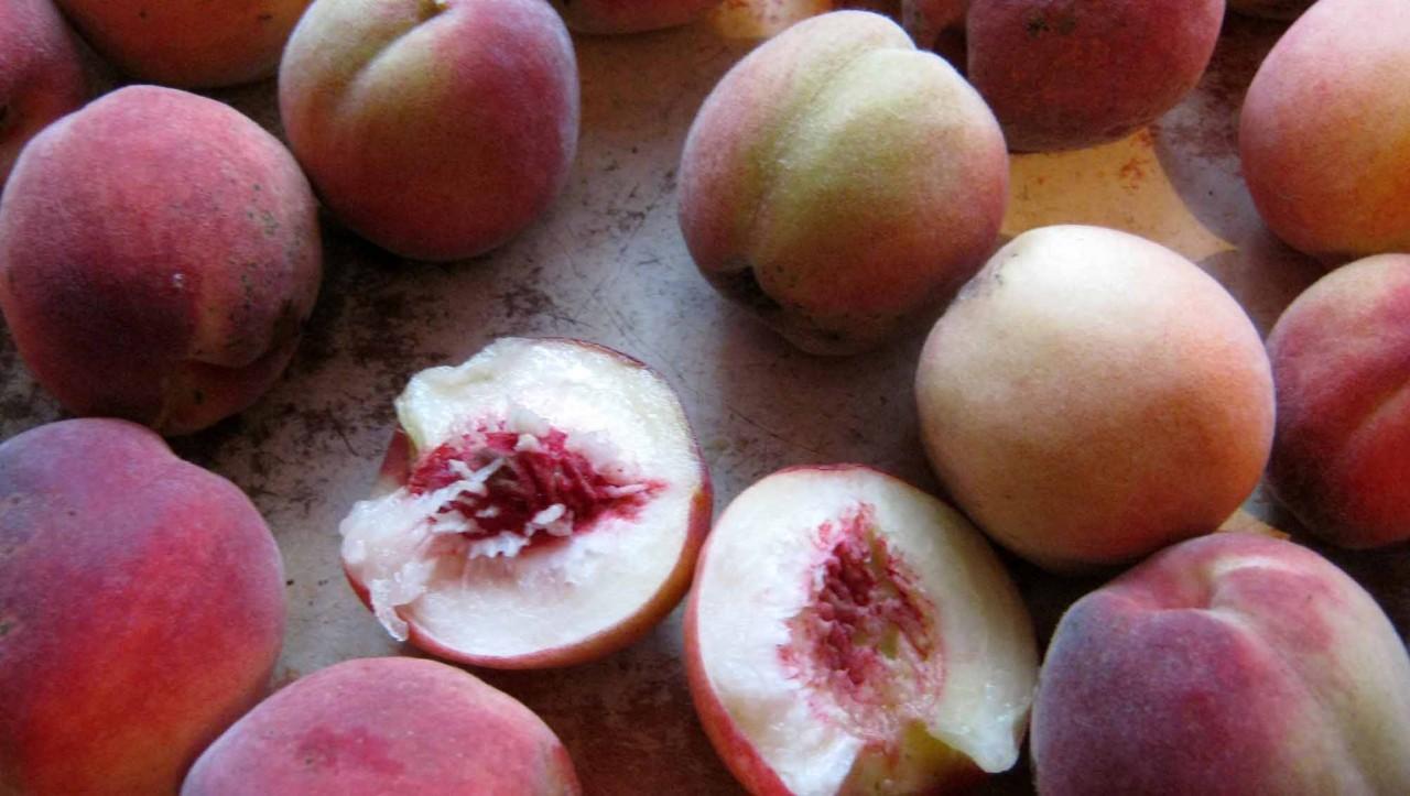 Выращиваем персик из косточки. Описание от А до Я. Подробнее смотрите полезное видео здесь