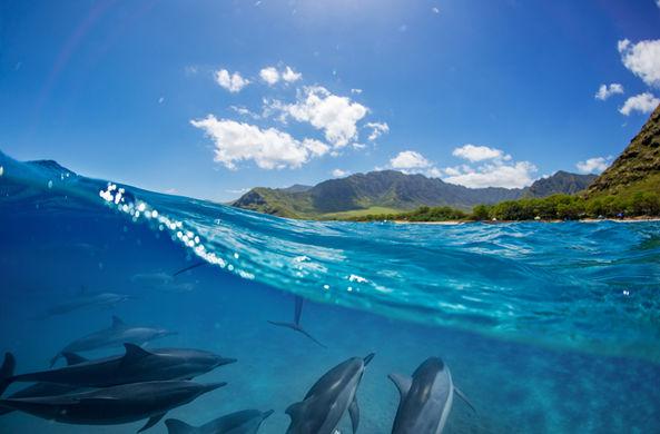 В Новой Зеландии местные жители не позволили дельфинам выброситься на берег