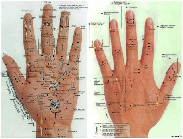 Активные точки и энергетические каналы органов на руках