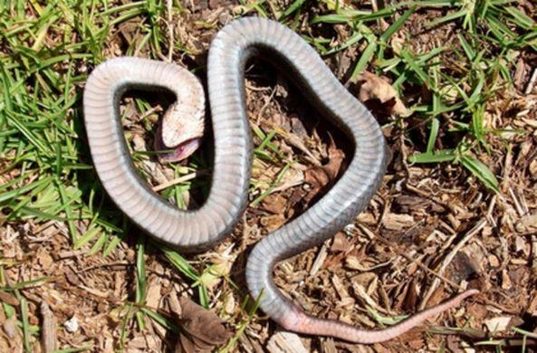 Жители Северной Каролины испугались зомби-змей