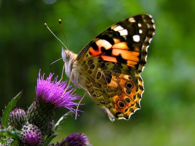 Рой разноцветных бабочек заполнил небо в Калифорнии