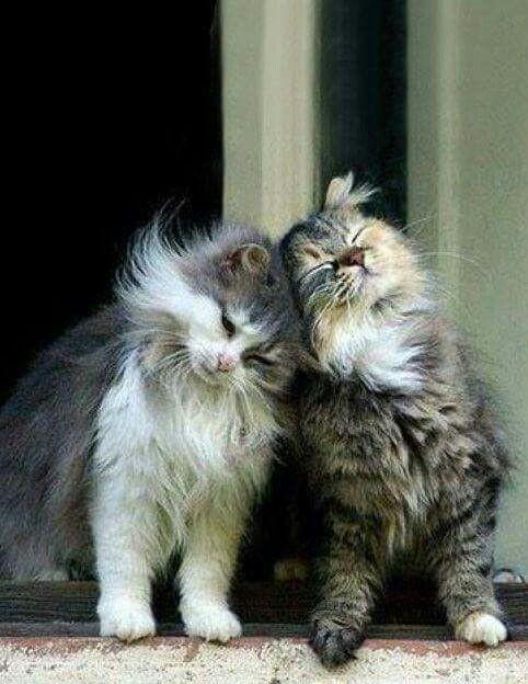 Любить и быть любимыми коты, милота, поведение, счастье, эмоции