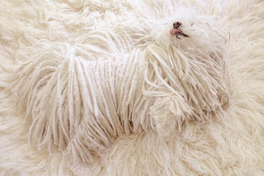 """Нешуточный """"зверь"""": Цукерберг показал чудные фото своей собаки-""""призрака"""""""