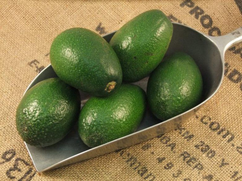 13 причин есть авокадо каждый день