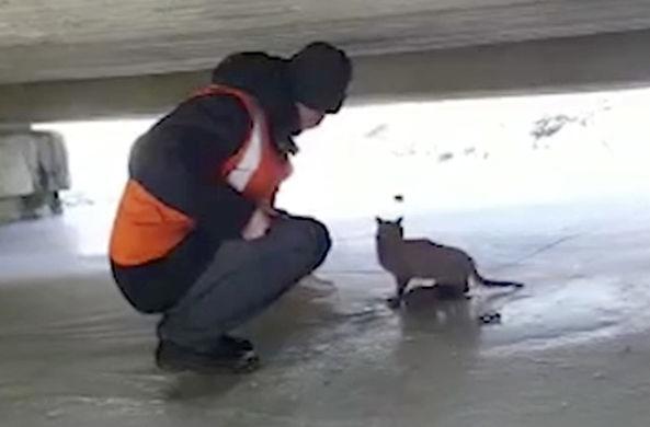 Под мостом в Приморье спасли кота в мешке