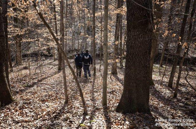 Человек сообщил полиции о странном месте в лесу. Когда офицеры приехали на место...