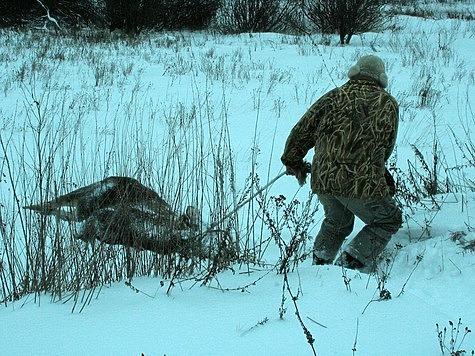 Подмосковные браконьеры задержаны после выстрела по лосю