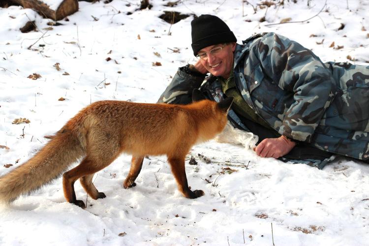 История дружбы лиса и сотрудника воронежского заповедника получила неожиданное продолжение