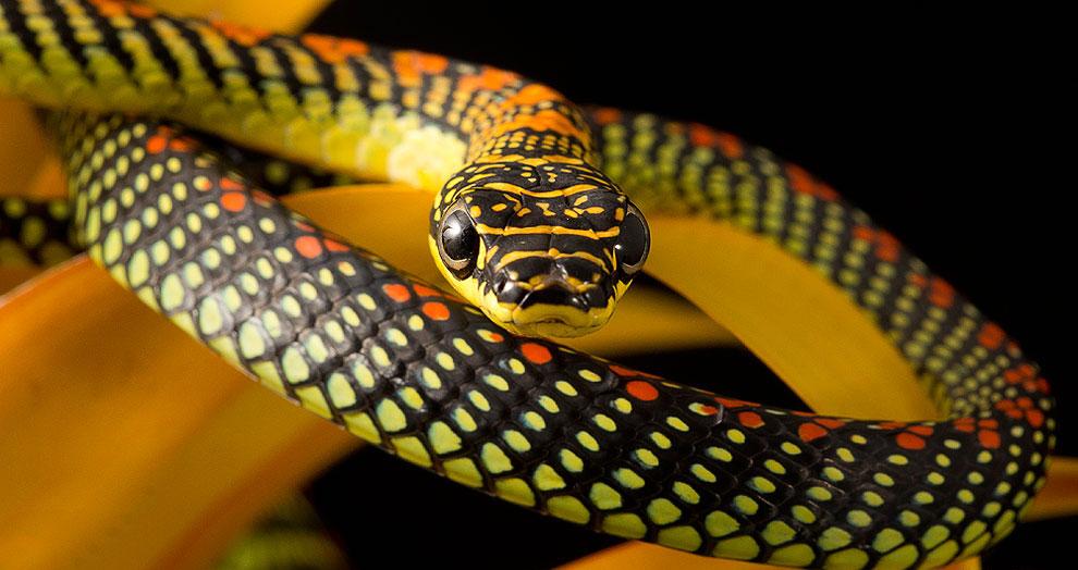 Змеи, которые летают