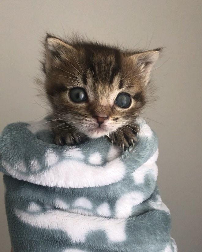 Кошка потеряла трех котят, но четвертый малыш боролся за свою жизнь, как мог!