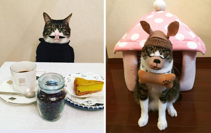 Этот котик – идеальная модель для фотосессии