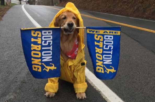 Пес-терапевт поддержал марафонцев