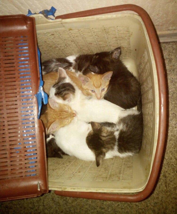 Дайте шанс котятам коробочницы!!!