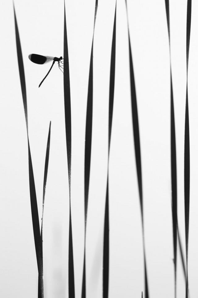 Номинация «Макросъёмка». «Вертикали». Стрекоза утром у воды. Автор Андрей Кузнецов