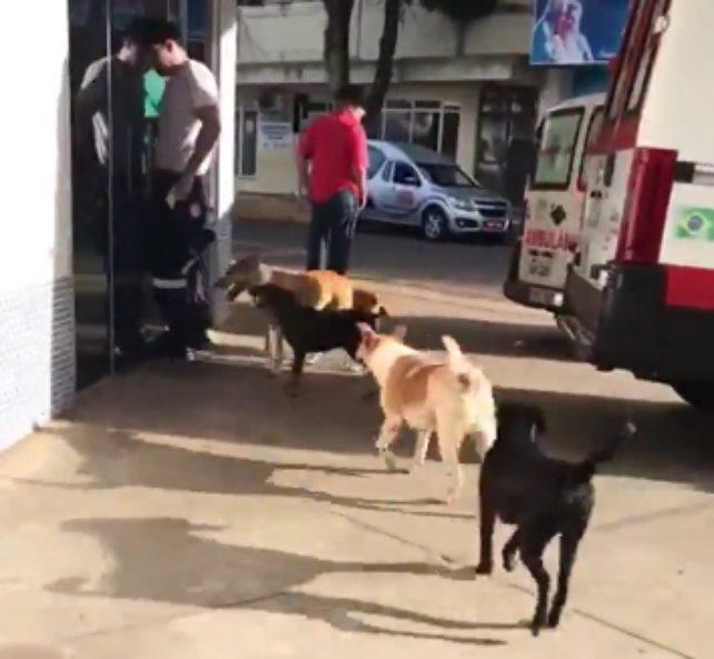 Когда бродягу забрали в больницу, все его собаки пришли и ждали его возле дверей