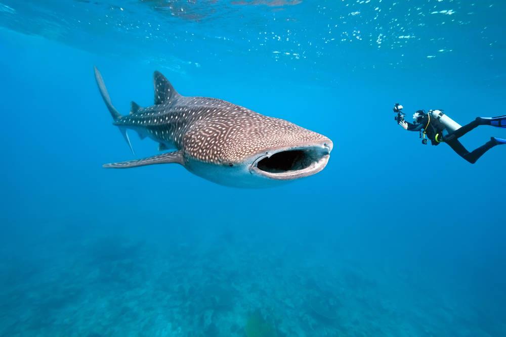почему люди боятся плавать