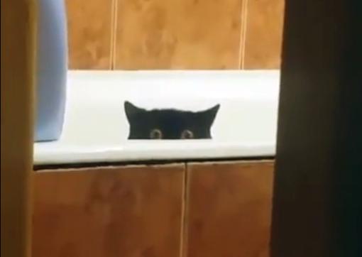 Кот украл свежую рыбу с кухонного стола и спрятался в ванной