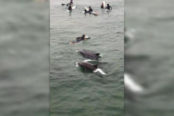 Неожиданное участие дельфинов в тренировке серферов попало на видео