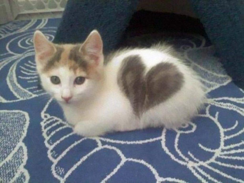 18 кошек с самыми удивительными окрасами в мире. Природа — тот еще художник!