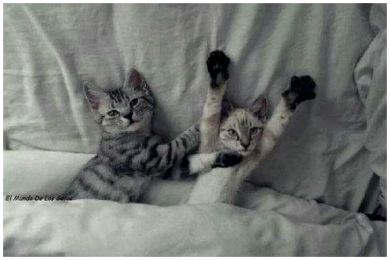Дурачиться по утрам коты, милота, поведение, счастье, эмоции