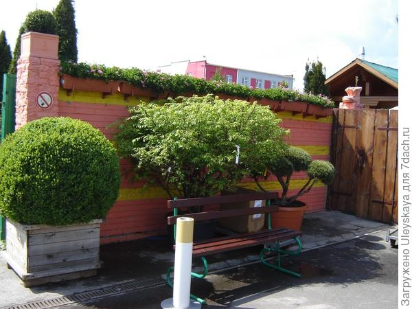 Древесные в контейнерах, фото сайта www.vashsad.ua