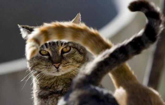 Разгадана одна из тайн кошач…