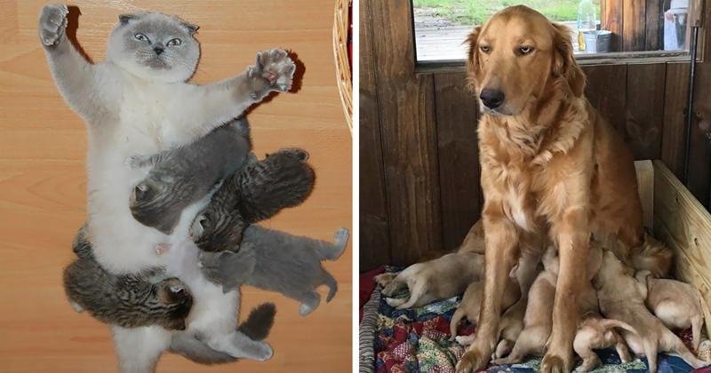 33 фотографии животных о том, каково это — быть матерью