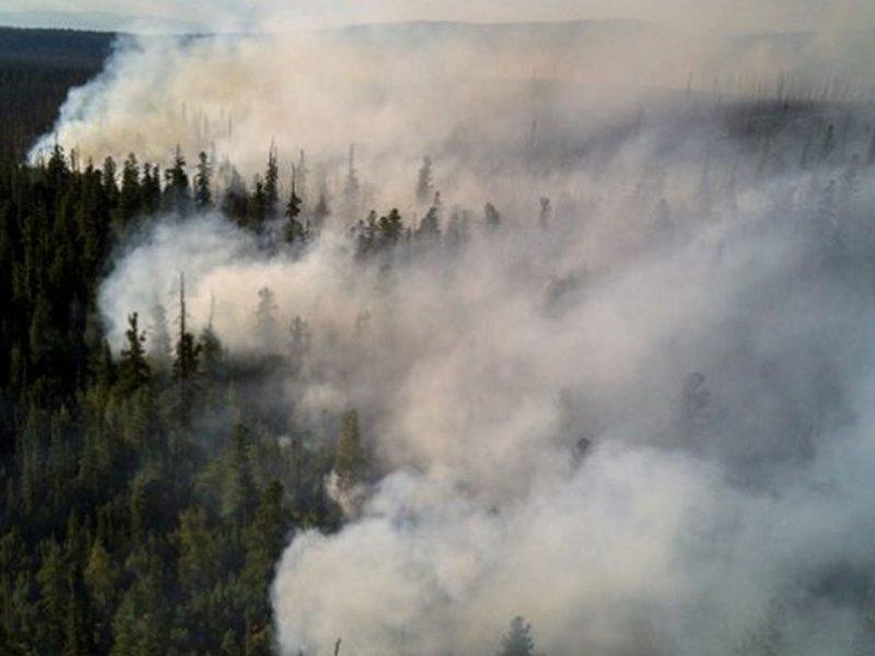 Кардиолог Ярослав Ашихмин: дым пожаров повышает вероятность инфарктов и инсультов
