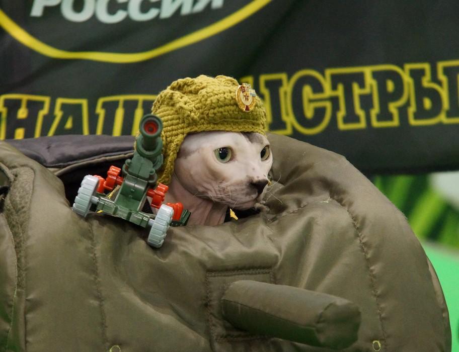 Зачем коты едут в Москву на танках