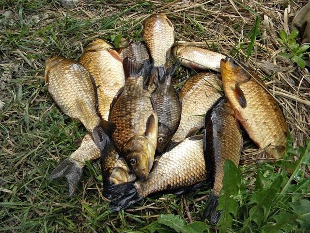 Про картошку для ловли рыбы. Важные нюансы