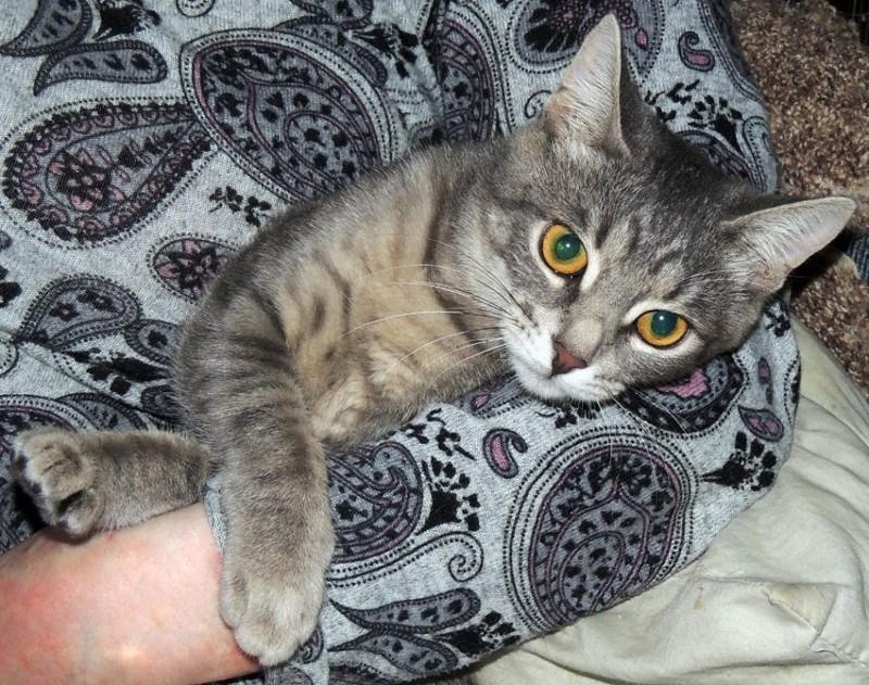 Мой любимый кошкарий забота, кошки, любовь., питомцы, помощь животным