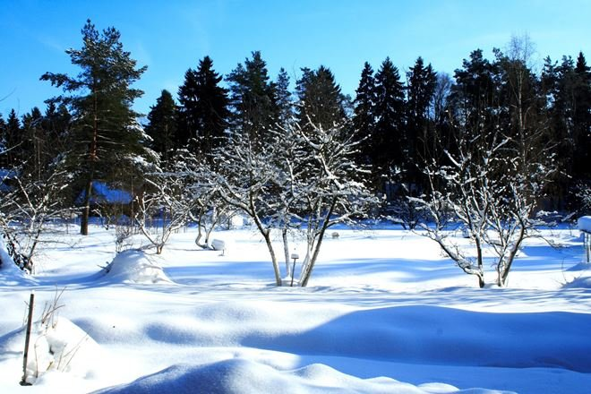 сад зимой в снегу