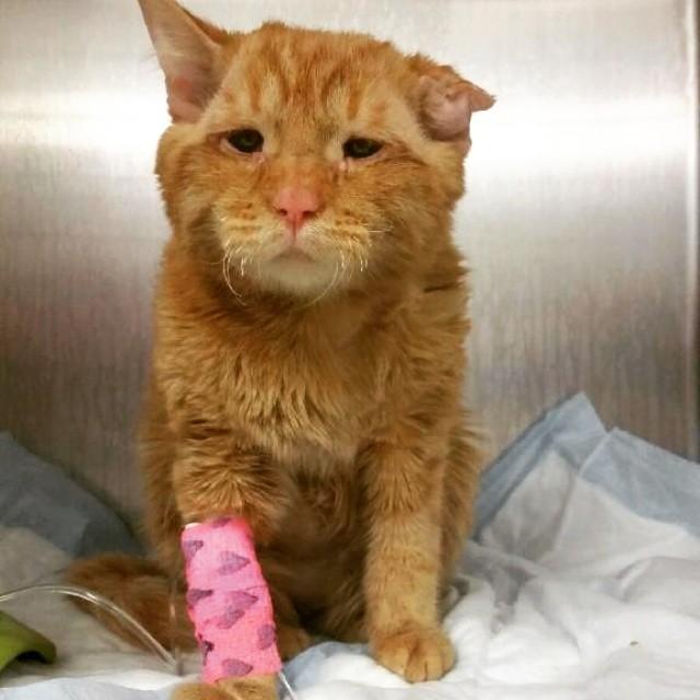 «Самый грустный кот» преобразился всего через час после того, как ему нашли новый дом