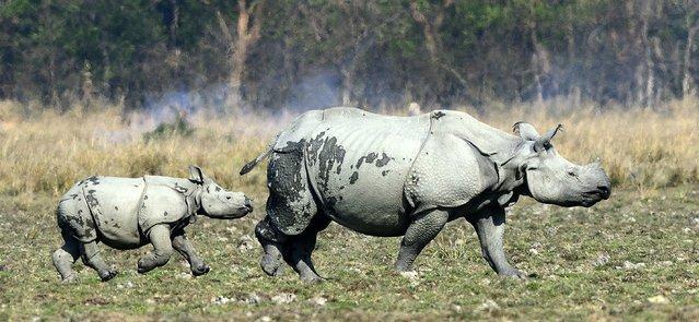 Материнство у животных