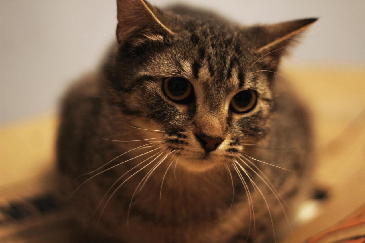 Иметь в доме такого невероятного кота - это счастье, радость и смех!