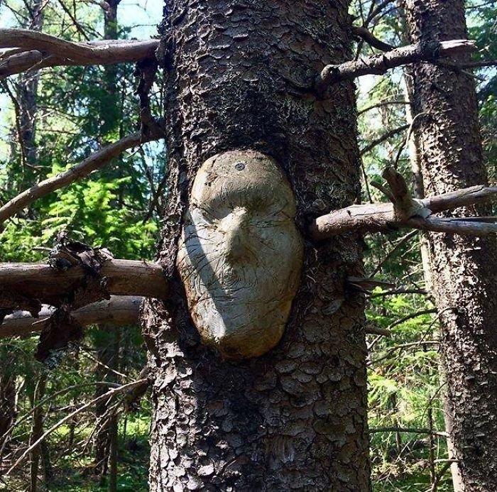 24. Лицо в стволе дерево, деревья, обман зрения, парейдолия, похоже да не то же, похоже на, похоже на лицо