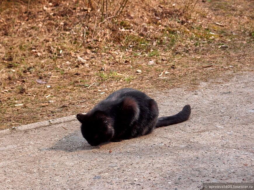 Меха, однако, у дюнного кота Васеньки холёные!