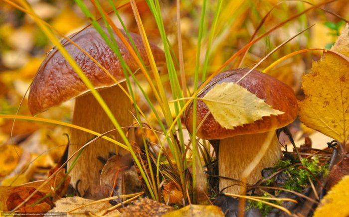 осенние грибы фото - 02