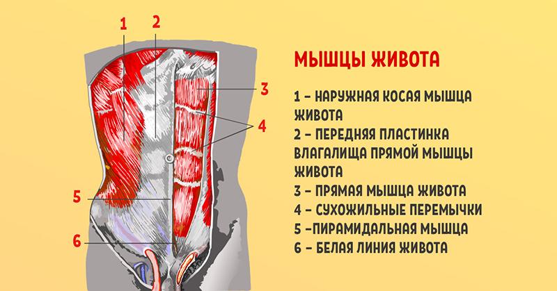 Идеальное упражнение для мышц живота