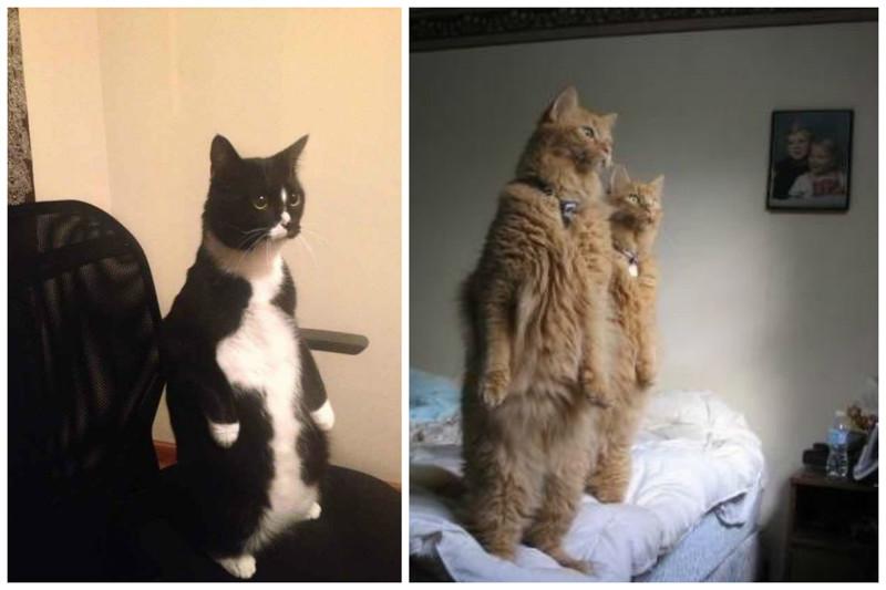 Любопытствовать, что там происходит за окном коты, милота, поведение, счастье, эмоции